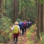 熊野古道に杖はいる?持ち物をもっと詳しく!初めての熊野古道を歩くために!