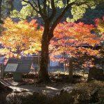 11月熊野古道の天気とおすすめコース!紅葉ウォークと熊野古道の名所観光!源泉かけ流し温泉は最高!