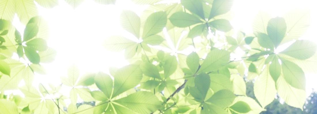熊野古道歩き旅とパワースポット・神社めぐり