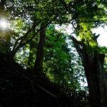【8/31-9/1熊野リトリート】玉置神社と熊野本宮大社参拝!祈り・浄化・蘇り!